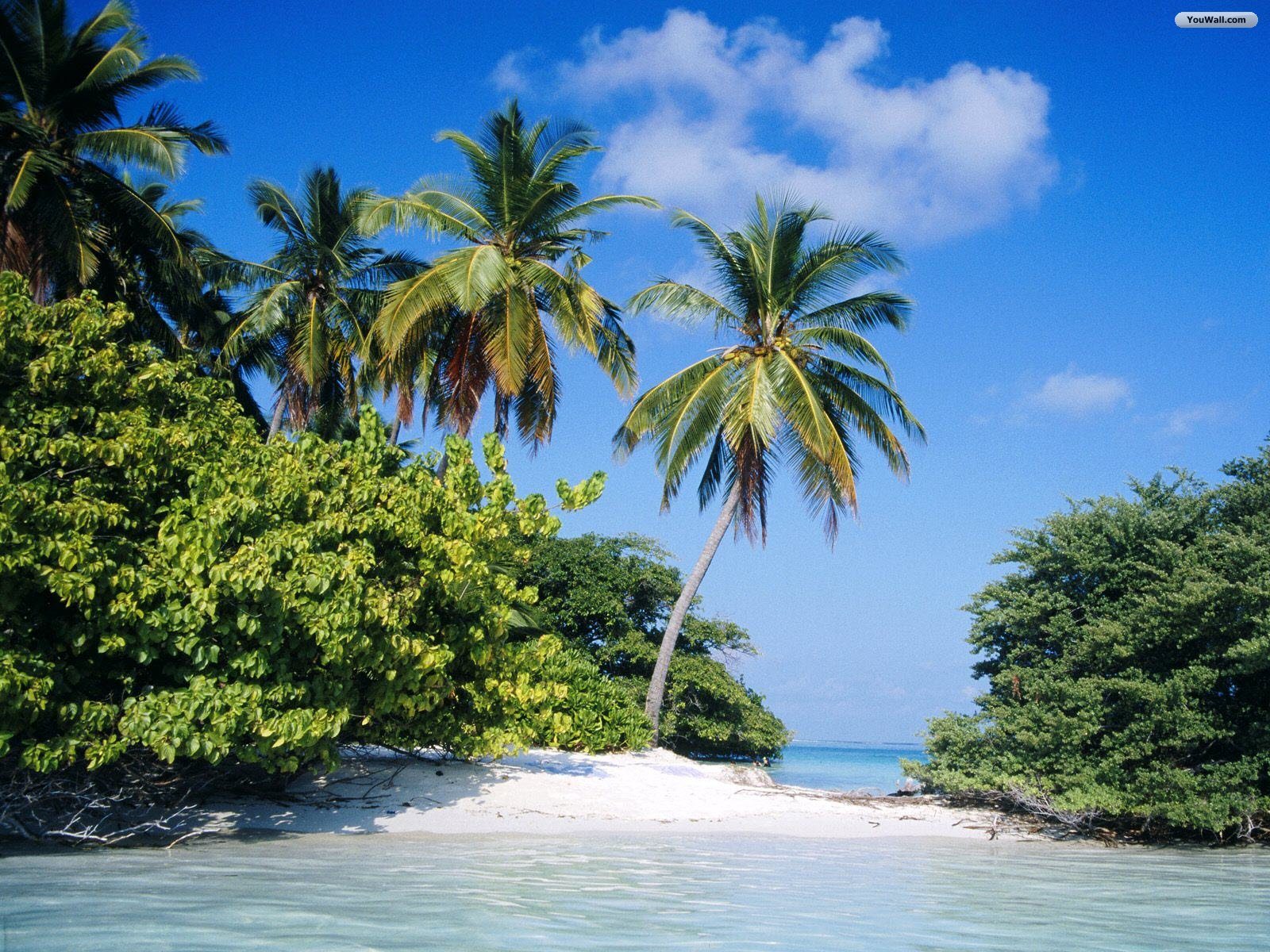 Tropical Island Pictures Wallpaper