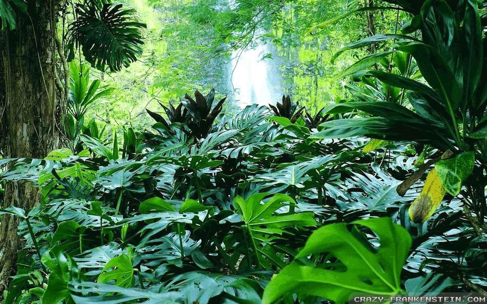 43 Tropical Forest Wallpapers