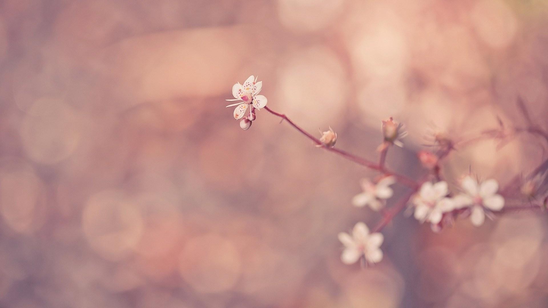 Flower Wallpaper Tumblr | PixelsTalk Net