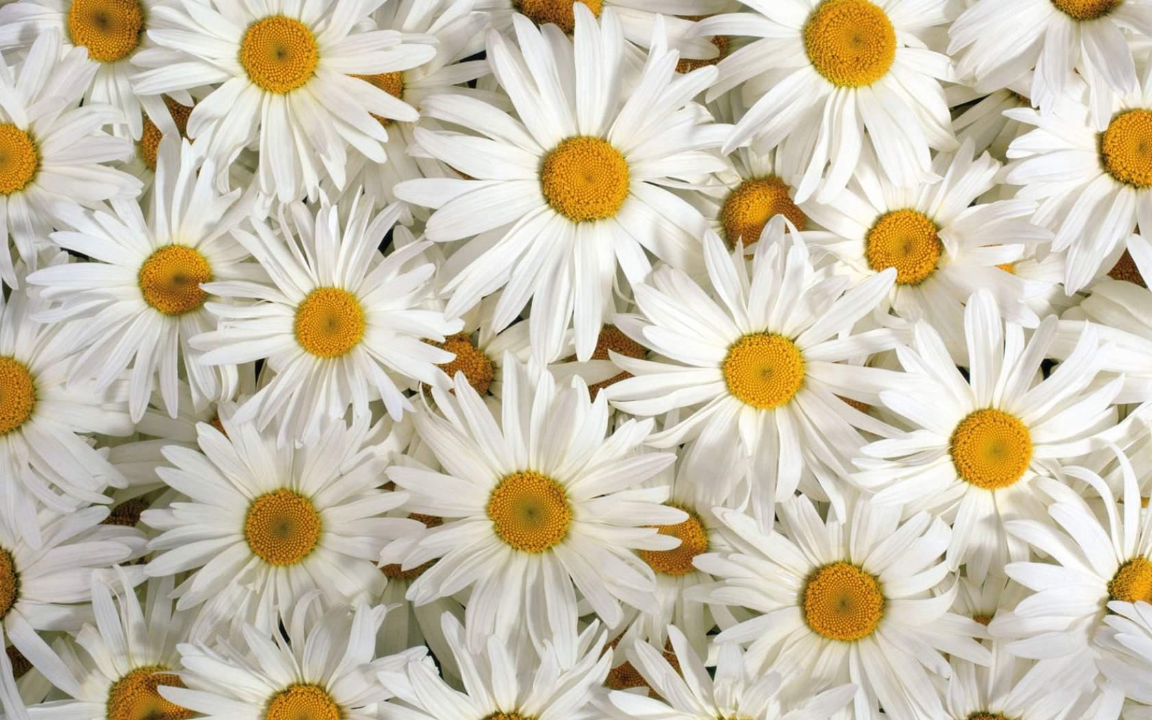 Flower Tumblr HD Wallpaper
