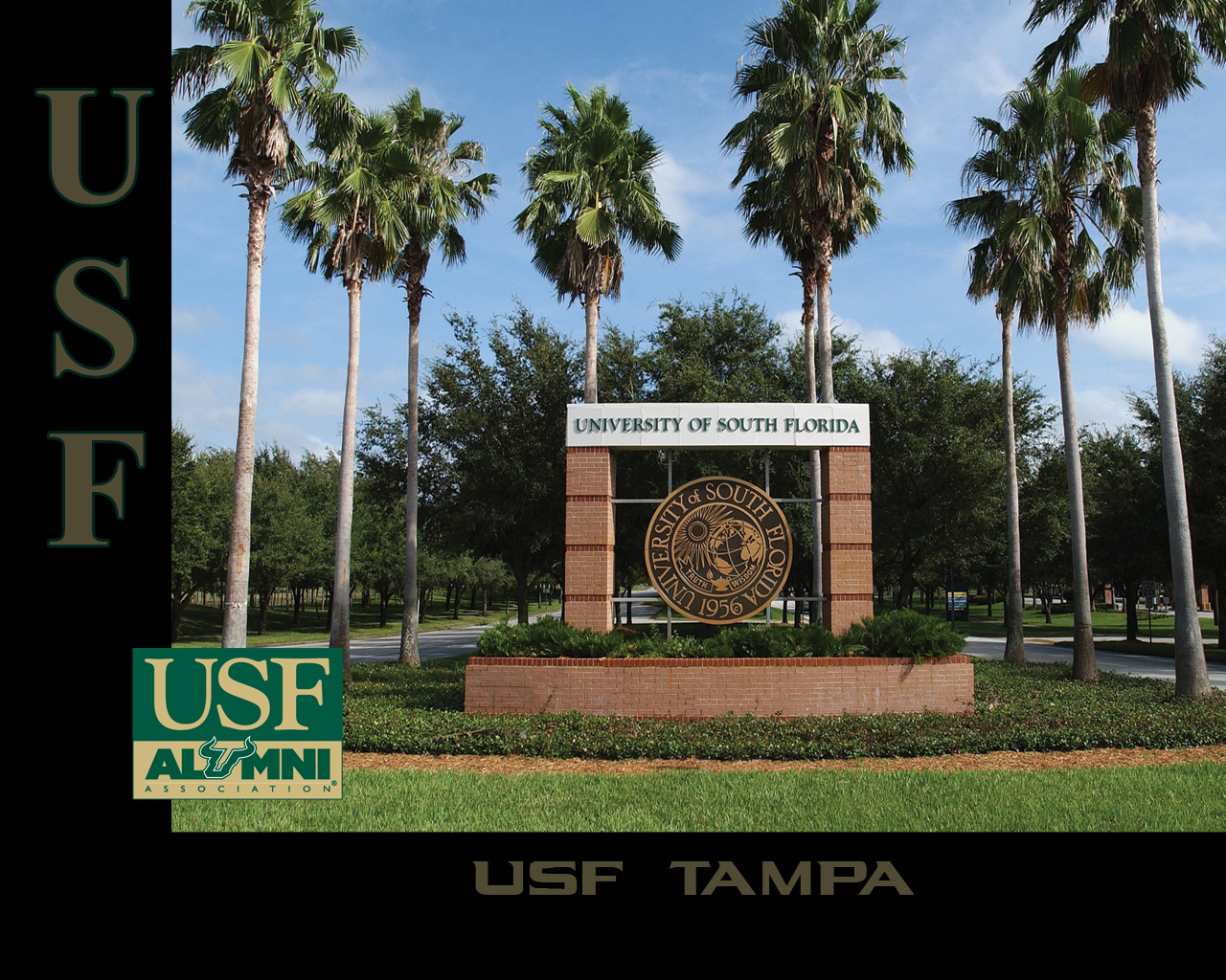 USF Alumni - USF Wallpaper