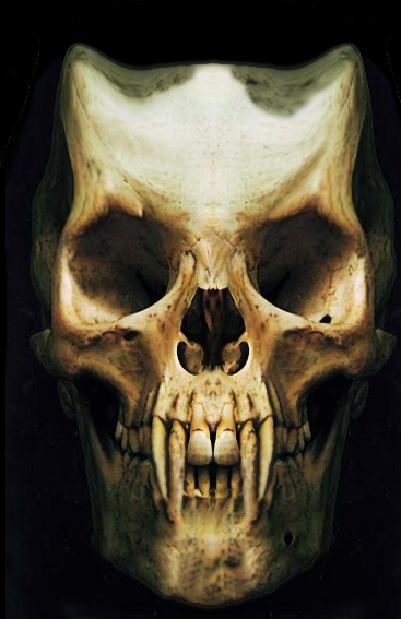 17+ images about skulls on Pinterest | Little shop of horrors