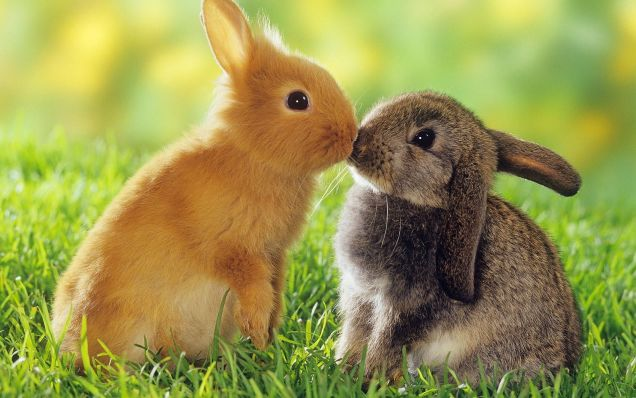 Collection of Baby Animals Wallpapers on HDWallpapers