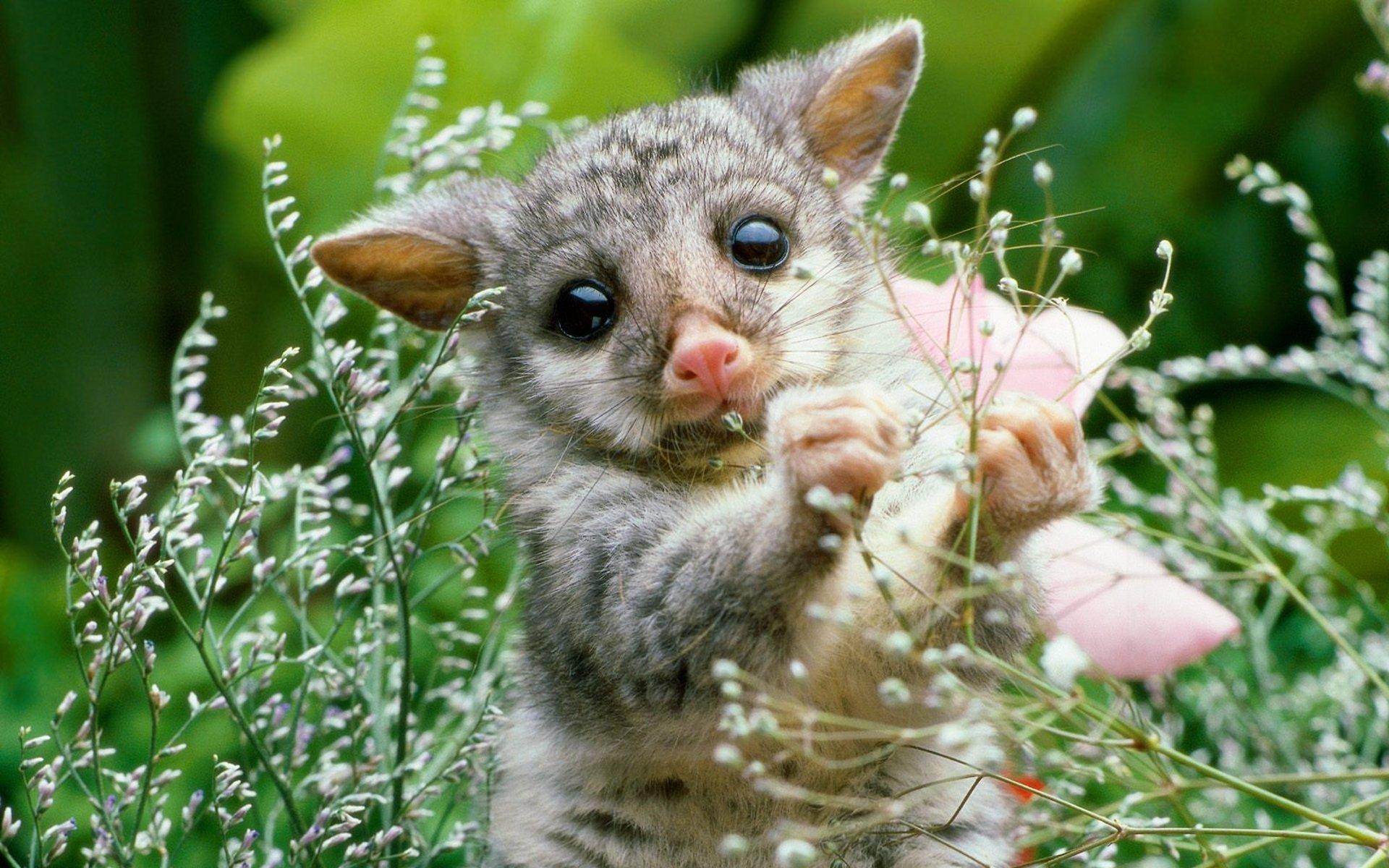 Baby Animal Wallpaper