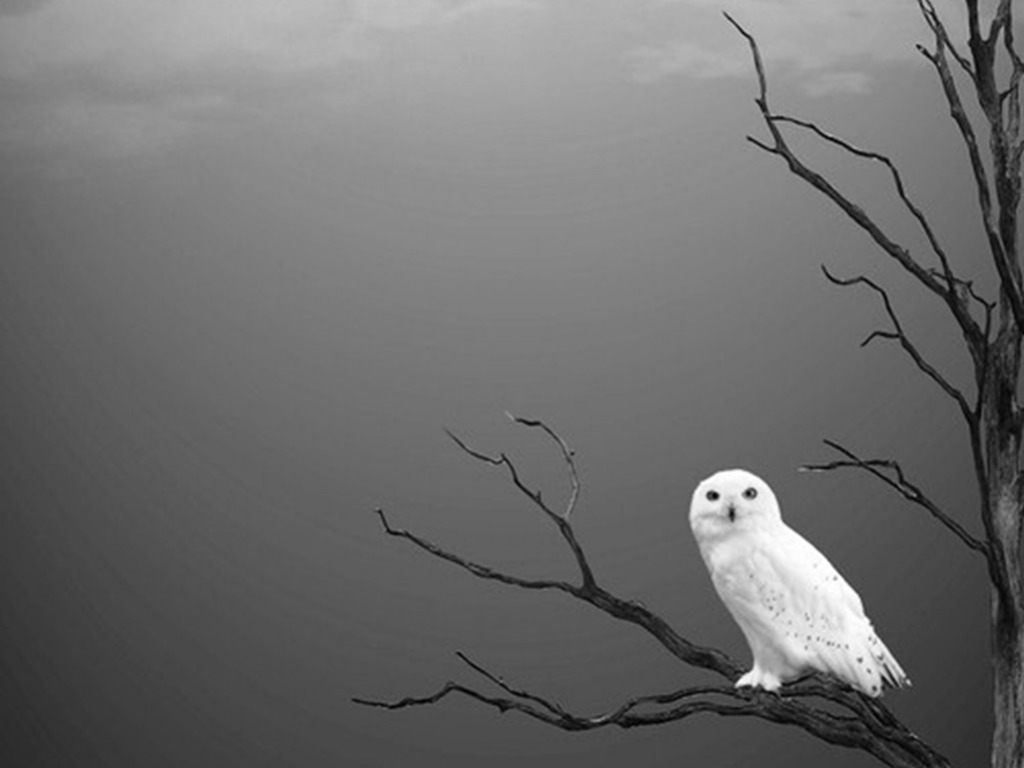 Owl Wallpapers Free Download | HD Wallpapers | Pictures | Images