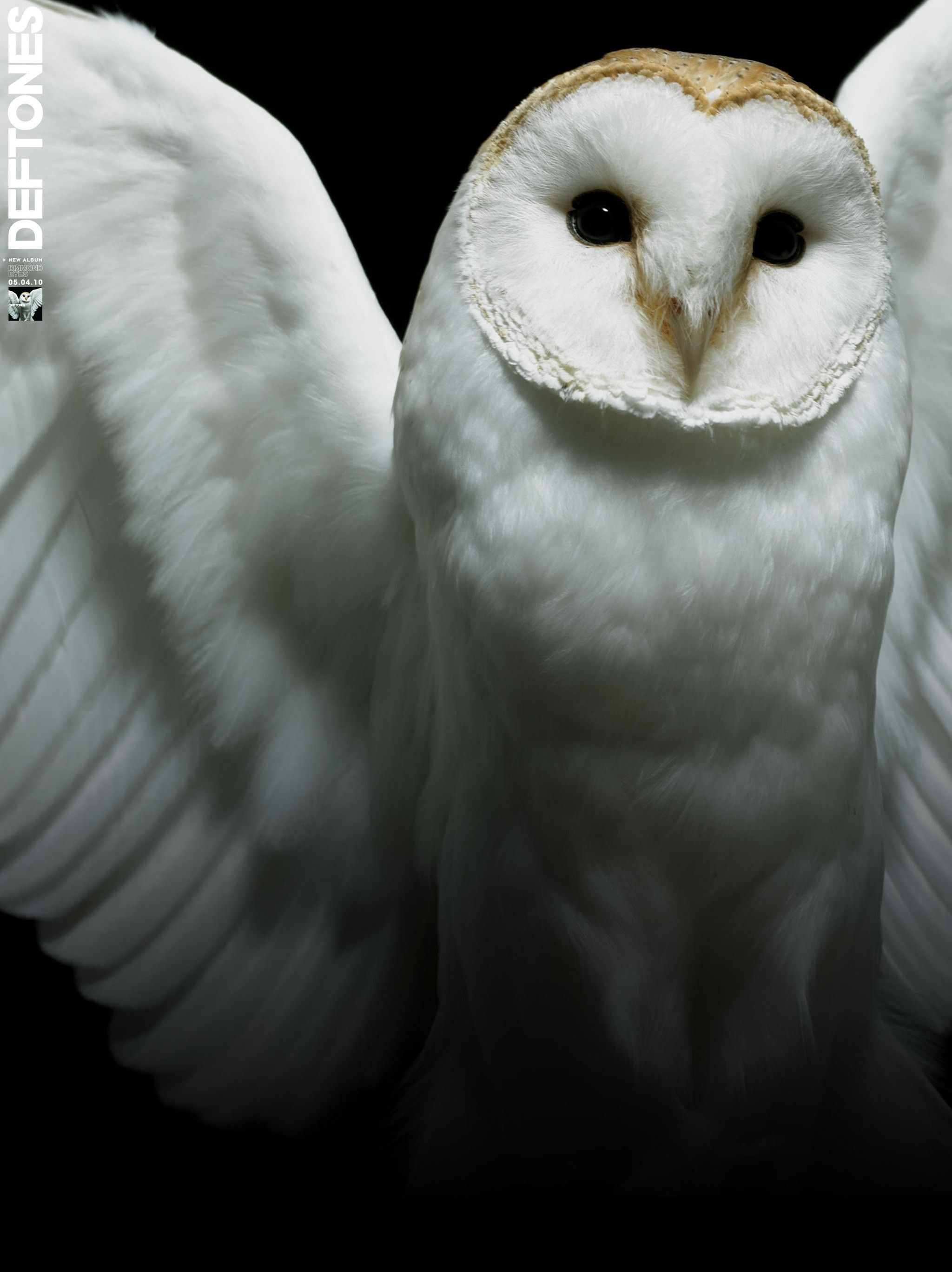 White Owl Wallpapers Group (70+)