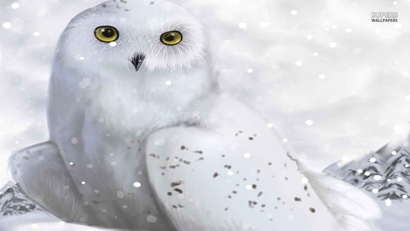 white owl wallpaper hd 1 – High Definition : Widescreen Wallpapers