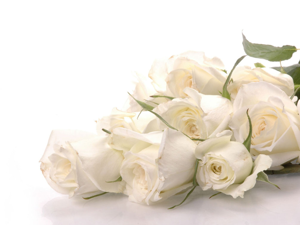 10 Best ideas about White Rose Pictures on Pinterest | White rose