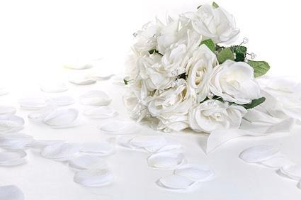 White rose free stock photos download (8,646 Free stock photos