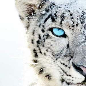 White tiger wallpaper - Android Apps on Google Play