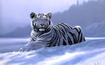 224 White Tiger HD Wallpapers | Backgrounds - Wallpaper Abyss