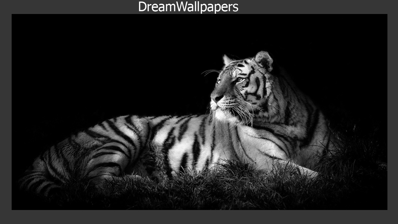 54 wallpaper android tiger graphic gtgtgt best wallpaper hd