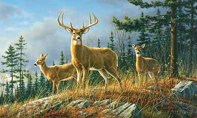 Whitetail backgrounds sf wallpaper whitetail voltagebd Image collections