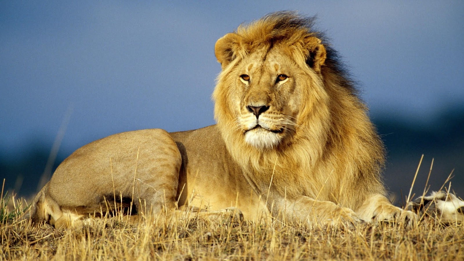 HD Wild Animals Wallpapers | Wild Animals Best Pictures Collection