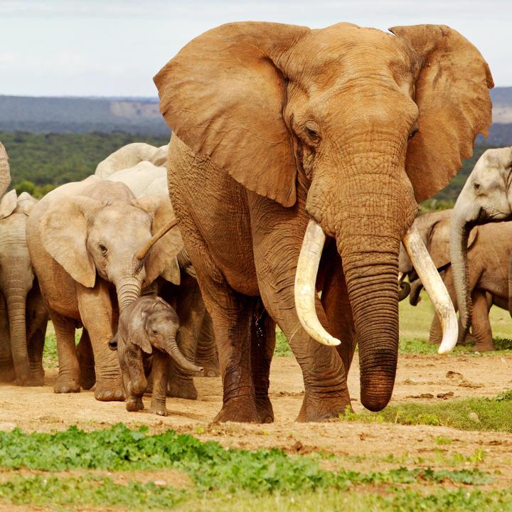 Wild Animals | Animal Planet