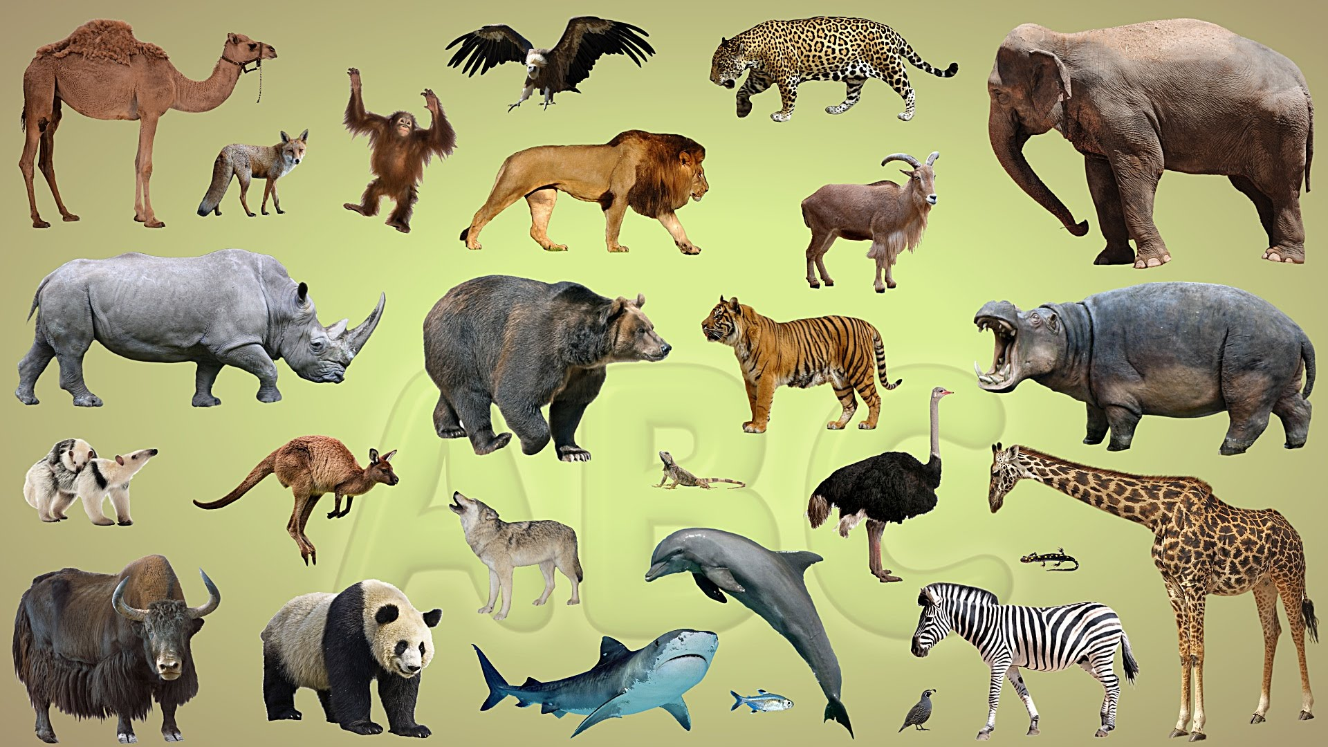 Learn the Alphabet with Wild Animals | ABC animals for children