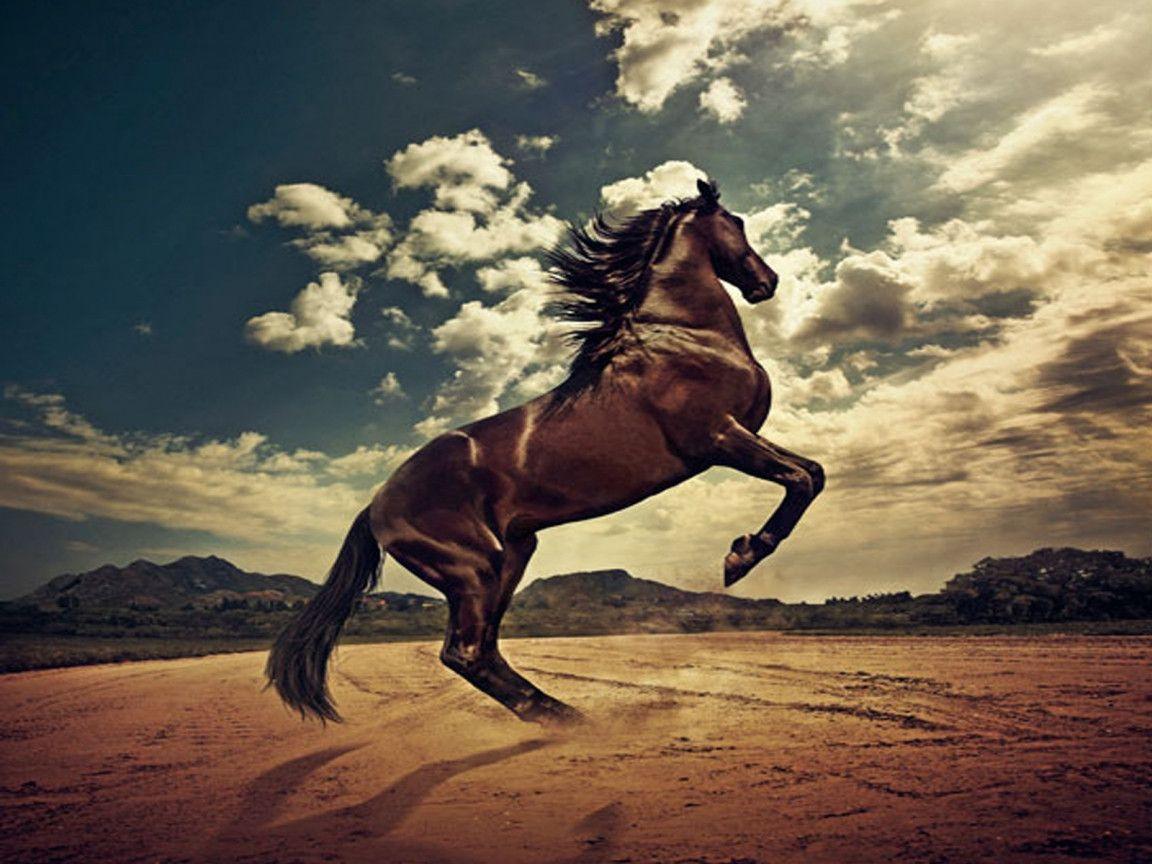 Wild Horse Wallpaper