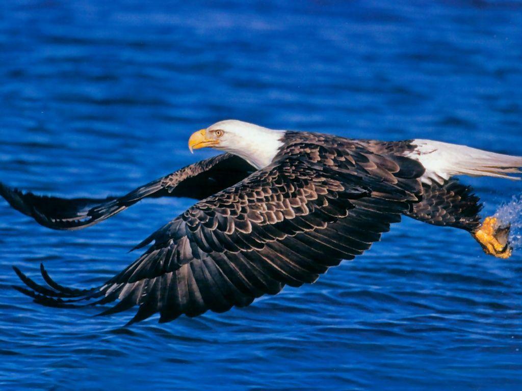 wildlife pics free download