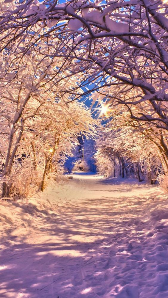 winter snow tree road iphone 6 wallpapers HD | iPhone 6 Wallpapers
