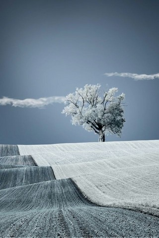 free iphone wallpapers hd: awesome snow winter tree iphone