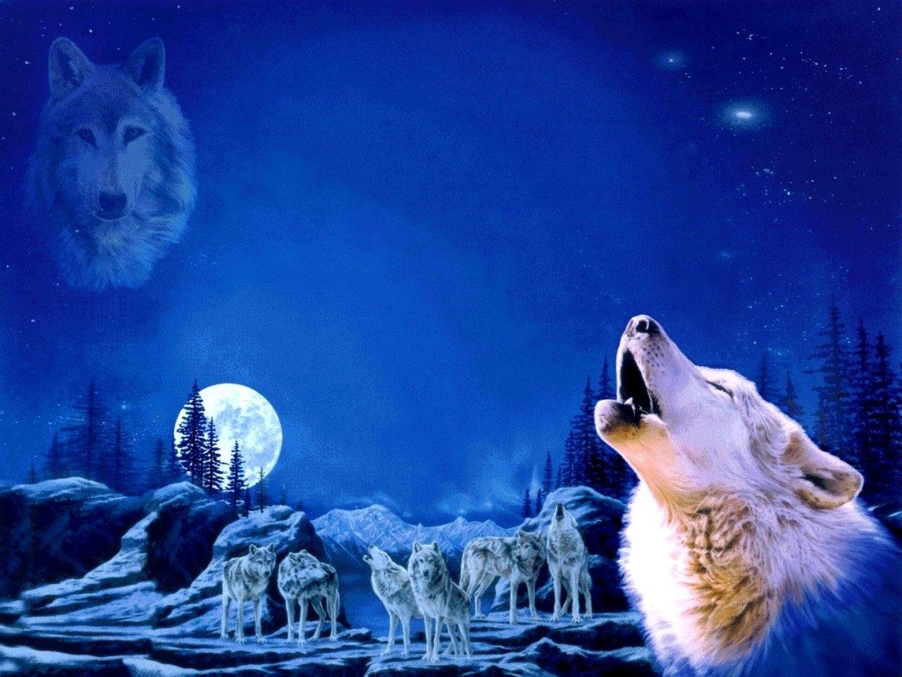 Wolf Pack Wallpaper Sf Wallpaper