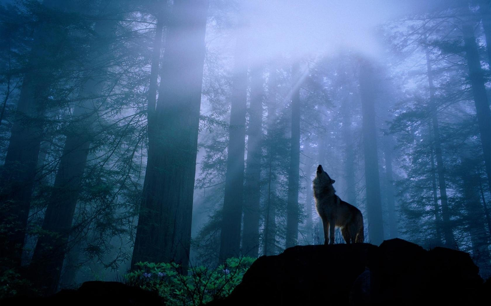 883 Wolf HD Wallpapers | Backgrounds - Wallpaper Abyss
