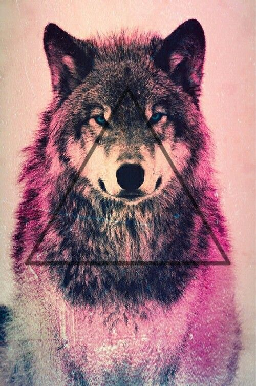 1000+ ideas about Wolf Wallpaper on Pinterest | How to draw wolf