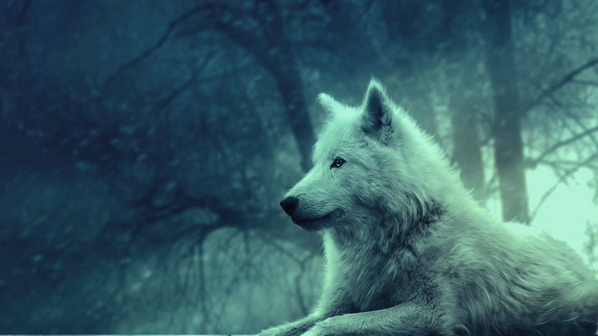Full HD 1080p Wolf Wallpapers HD, Desktop Backgrounds 1920x1080