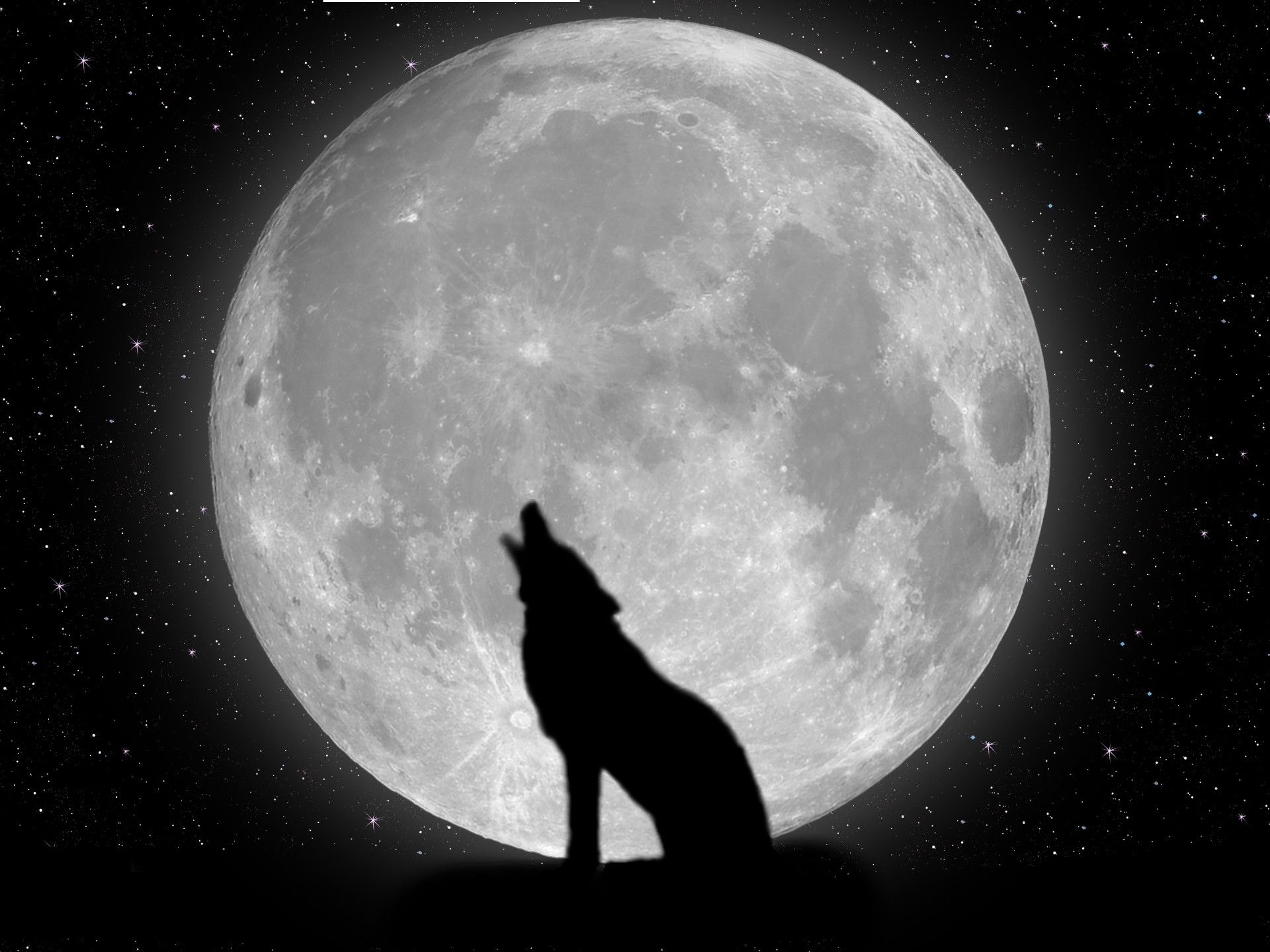 Wolf Wallpapers For Desktop