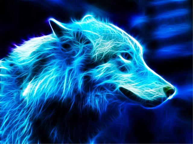 Collection of Free Wolf Wallpaper Download on HDWallpapers