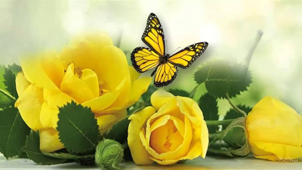 Yellow Roses       (music Michel Pepe)        - YouTube