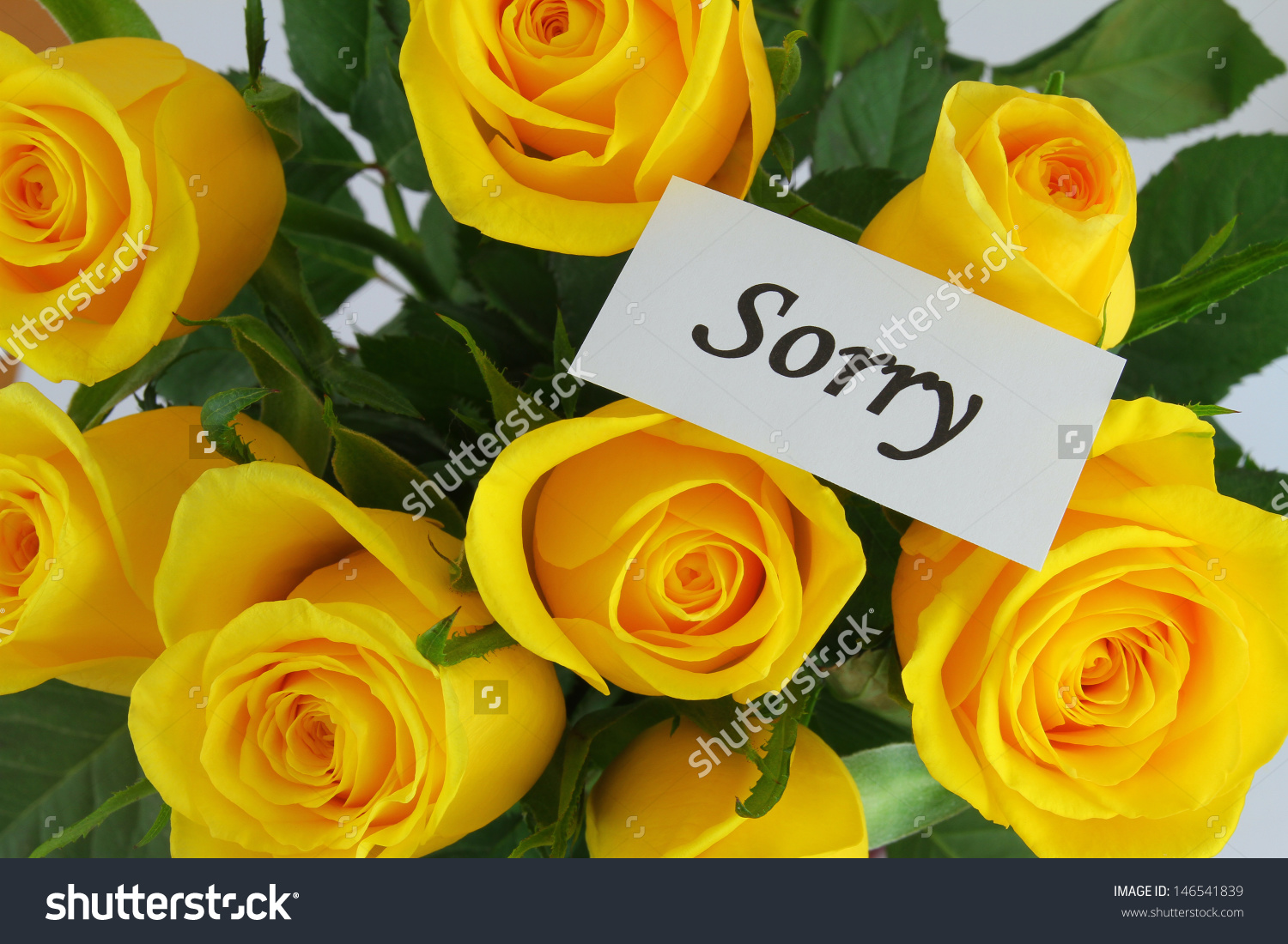 Sorry Card Yellow Roses Stock Photo 146541839 - Shutterstock