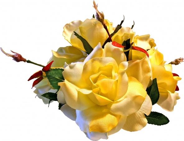 Src Yellow Rose Free Stock Photos Download