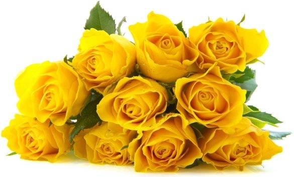 yellow roses images