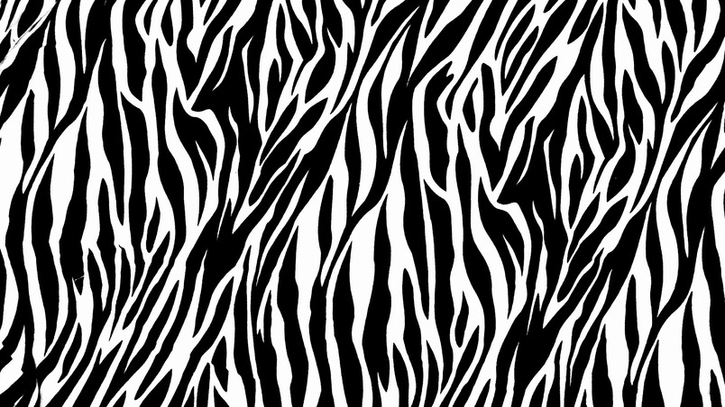 Collection of Zebra Print Wallpaper on HDWallpapers
