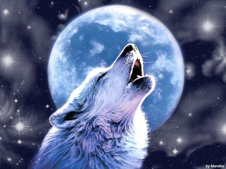 Moon Wolf Wallpapers Group (70+)