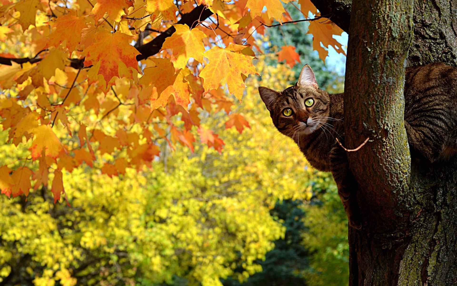 Autumn Cat Wallpaper