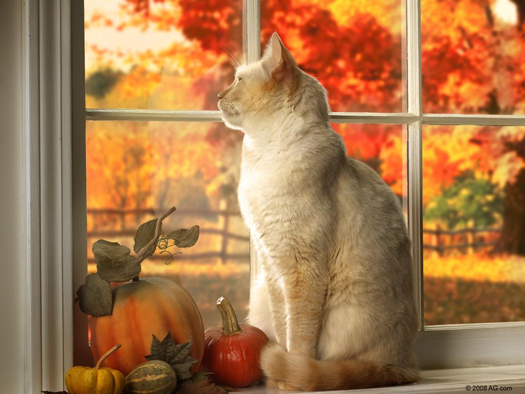 78 Best images about Autumn Cats on Pinterest   Kittens, Black
