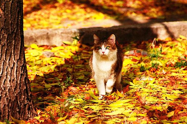 Autumn cat by Emmatyan on DeviantArt