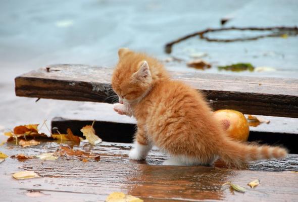 Wallpaper kitten, wood, leaf, autumn, cat desktop wallpaper