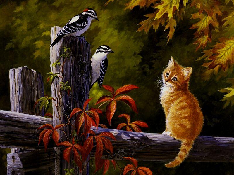 Autumn Cat Wallpaper   tianyihengfeng Free Download High