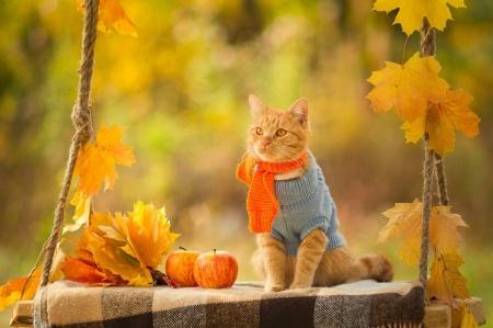 Autumn Cat - Cats & Animals Background Wallpapers on Desktop Nexus