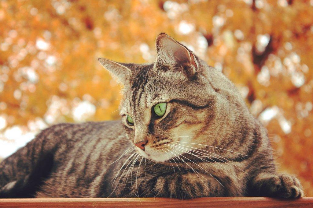 Cat Autumn Wallpaper by mzenun on DeviantArt