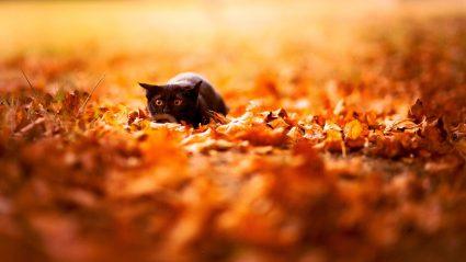 Autumn Cat Animal Wallpaper 5672 #729 Wallpaper   Dexab