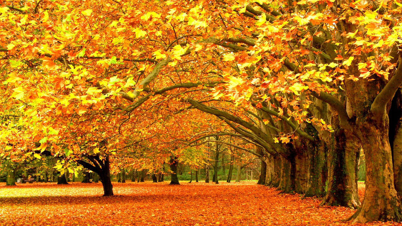 Fall Themed Desktop Backgrounds Group (71+)