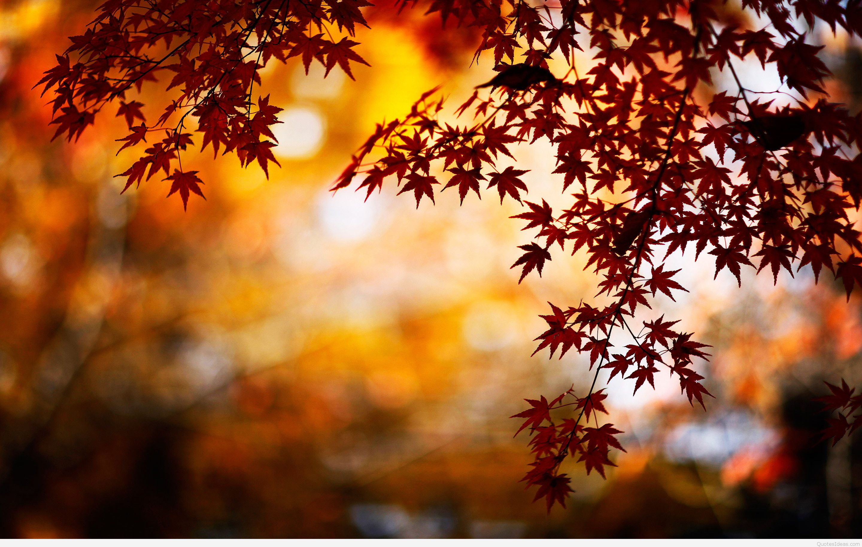 Autumn Wallpapers Hd