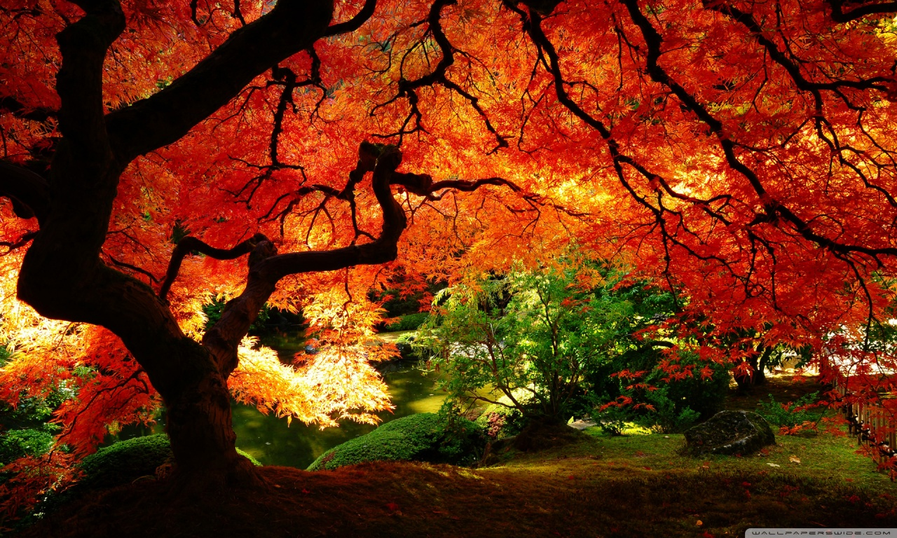Beautiful Autumn HD desktop wallpaper : Mobile : Dual Monitor