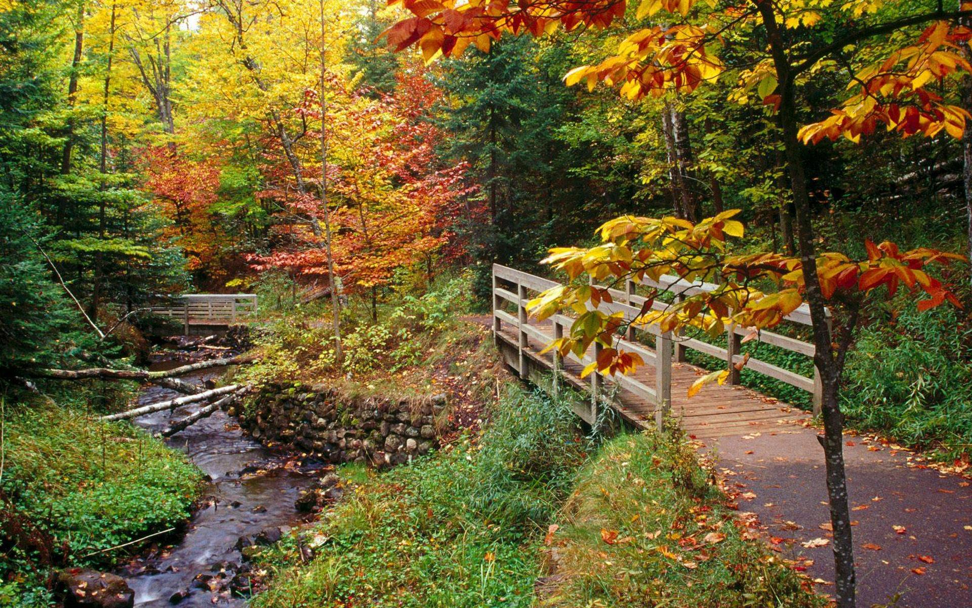Autumn Wallpaper Widescreen - wallpaper
