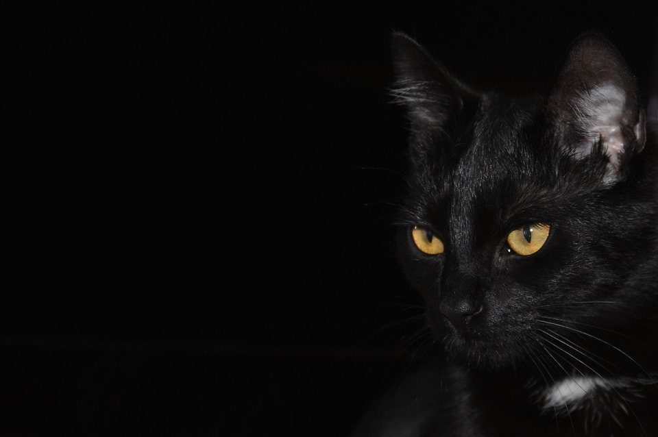 Cat, Backgrounds, Textures - Free images on Pixabay