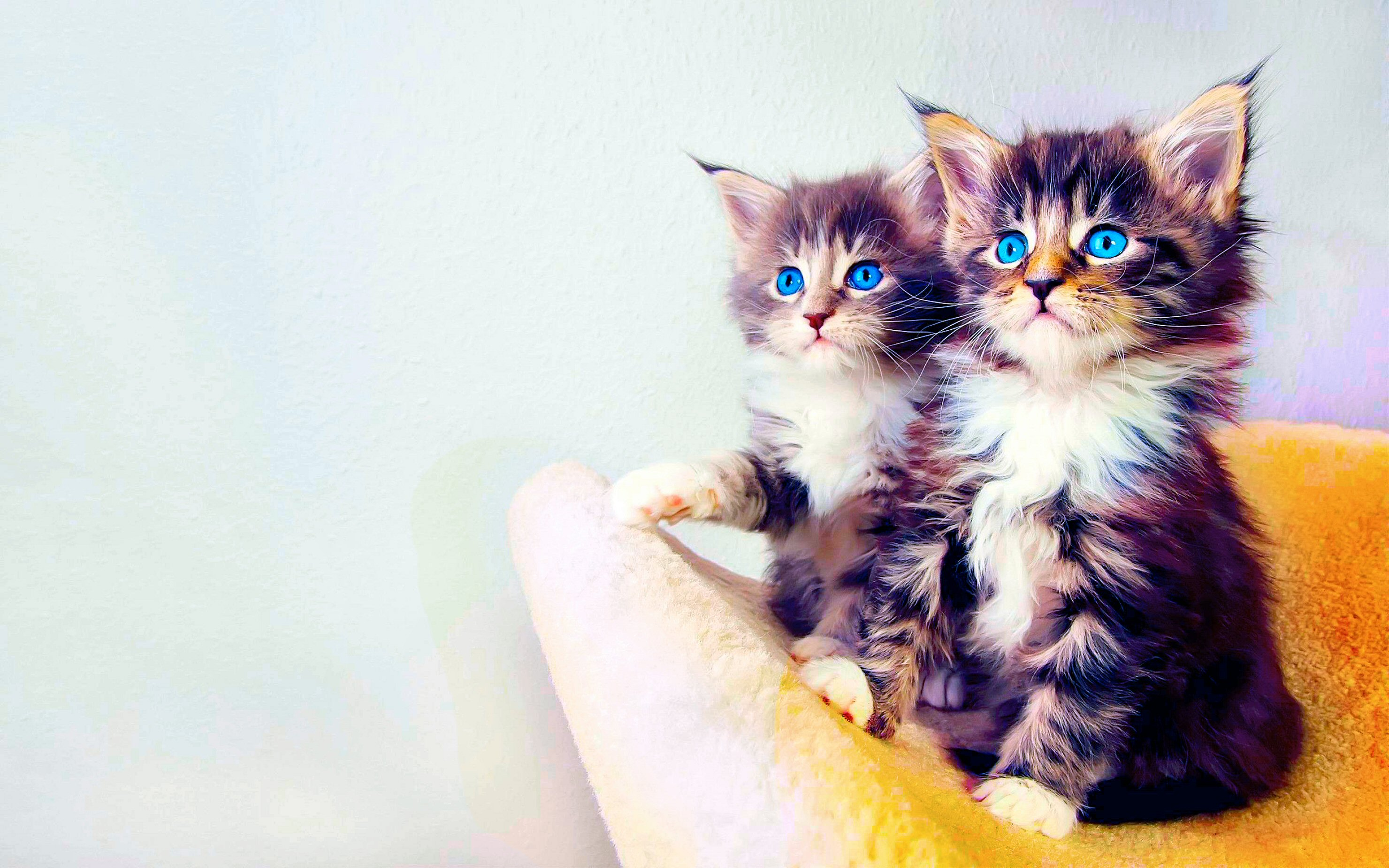 6205 Cat HD Wallpapers   Backgrounds - Wallpaper Abyss